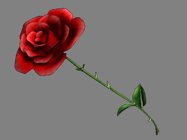 redrose4