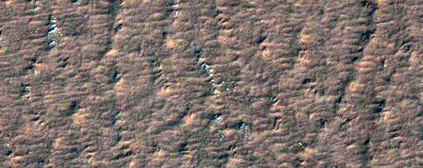 Polar Araneiform Trough Network