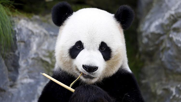 FOTOS: China crea un potente parque solar con forma de panda gigante