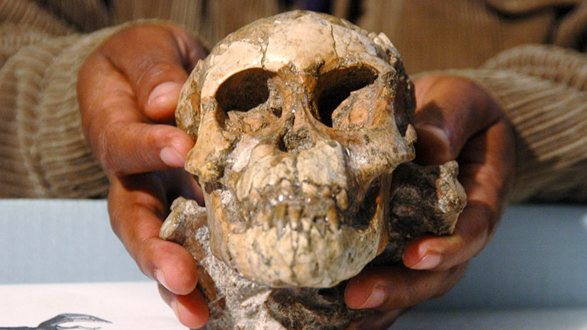 El secreto de Selam, la niña de 3,3 millones de años que trepaba a los árboles