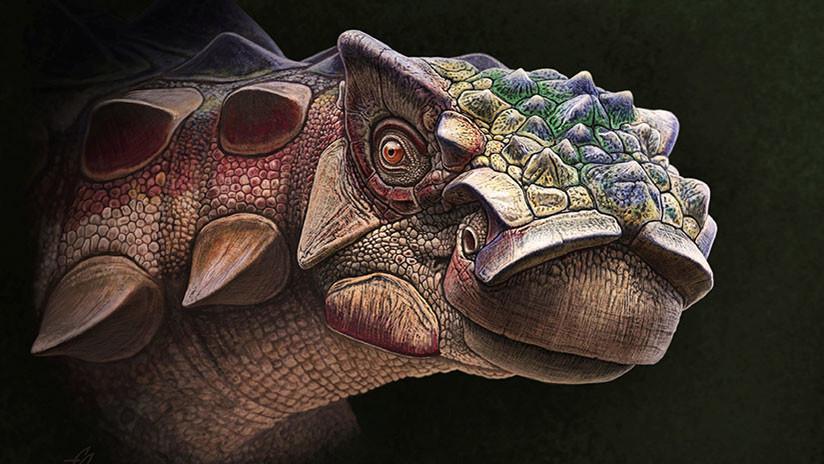 FOTO: Descubren una nueva especie de dinosaurio acorazado en EE.UU.