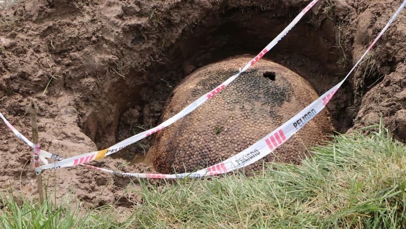 Un grupo de pescadores encuentra en Argentina el caparazón de un megamamífero de más de 10.000 años de antigüedad