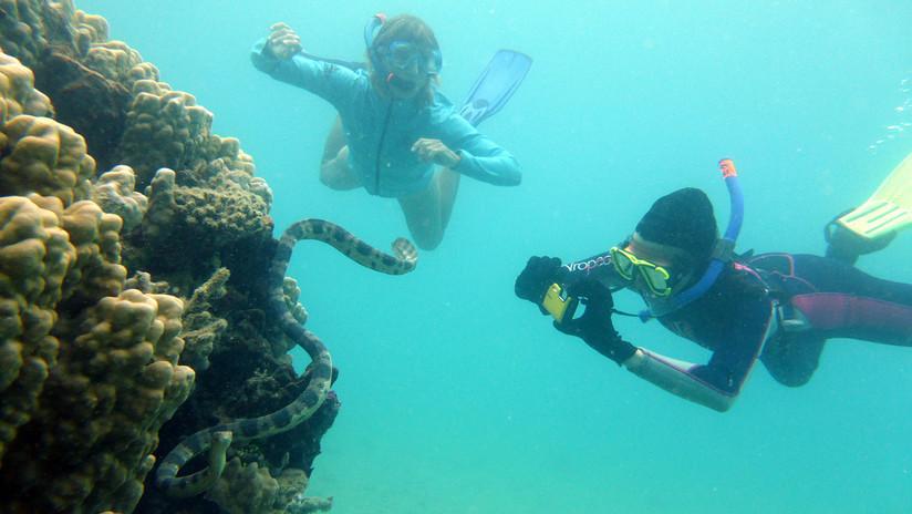 """""""Abuelas fantásticas"""" ayudan a rastrear una población de serpientes marinas venenosas"""